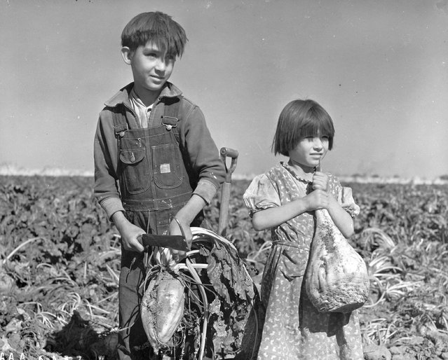 """Children and Sugar Beets"". Hall County, Nebraska, October 17, 1940. (Photo by L. C. Harmon)"