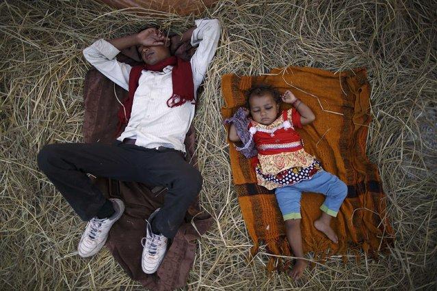 "A man and his daughter sleep near the enclosure for buffalos awaiting sacrifice on the eve of the sacrificial ceremony for the ""Gadhimai Mela"" festival in Bariyapur November 27, 2014. (Photo by Navesh Chitrakar/Reuters)"