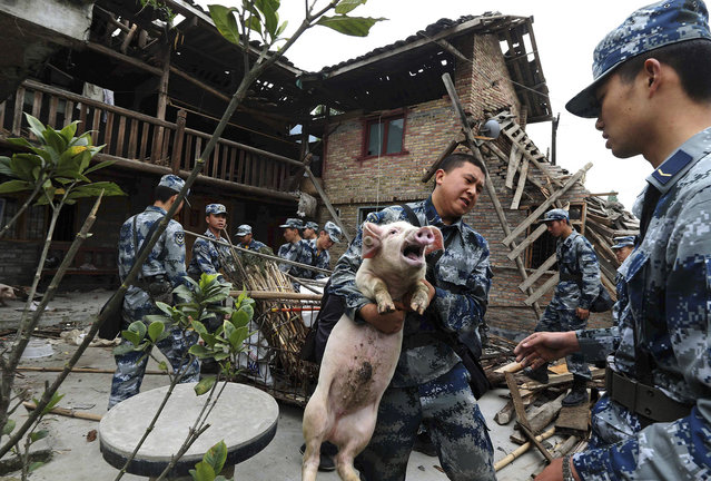 Rescue workers carry a pig out from a damaged house after Saturday's earthquake hit Lushan county, Ya'an, Sichuan province, April 22, 2013. The earthquake left 193 dead, 25 missing and 12,211 injured as of 6 a.m. Tuesday, according to Xinhua News Agency. Picture taken April 22, 2013. (Photo by Reuters/China Daily)