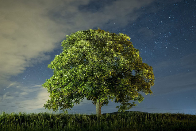 In this long exposure image a bushy tree is pictured in the foreground of a dusky night sky near Matraverebely, 90 kms northeast of Budapest, Hungary, 09 May 2016, on the eve of Birds & Trees Day celebrated in Hungary. (Photo by Peter Komka/EPA)