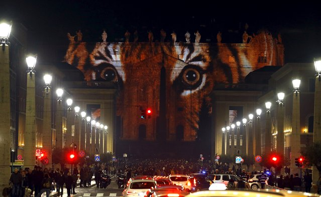"""A picture of a tiger, part of an art projection featuring images of humanity and climate change artistically rendered by Obscura Digital, is projected onto the facade of St. Peter's Basilica, as part of an installation entitled """"Fiat Lux: Illuminating our Common Home"""" as a gift to Pope Francis on the opening day of the Extraordinary Jubilee, at the Vatican, December 8, 2015. (Photo by Stefano Rellandini/Reuters)"""