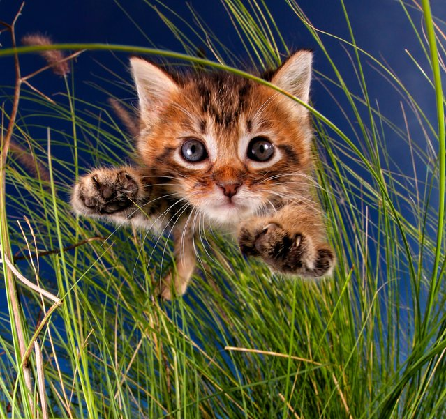 """Bug-a-Boo. """"Life was pretty good for these kitties, and the word got out, which inspired more to move in"""". (Photo by  Seth Casteel/Hachette Australia)"""
