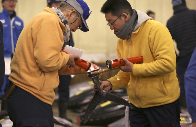 Prospective buyers inspects the quality of fin of a fresh tuna before the first auction of the year at Tsukiji fish market  in Tokyo, Tuesday, January 5, 2016. (Photo by Eugene Hoshiko/AP Photo)