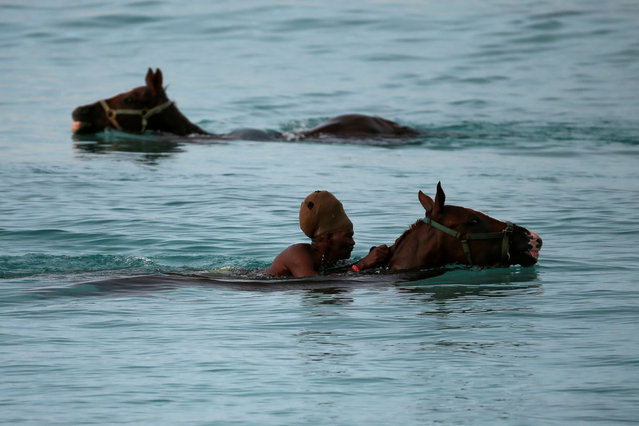 Handlers swim with horses from the Garrison Savannah in the Caribbean Sea near Bridgetown, Barbados December 1, 2016. (Photo by Adrees Latif/Reuters)