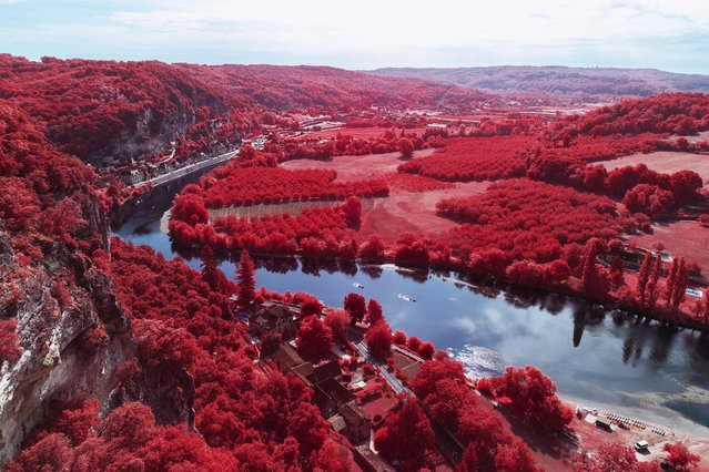 In others, iwhole forests glow red, giving the French countryside an otherworldly look. (Photo by Pierre-Louis Ferrer/Caters News Agency)
