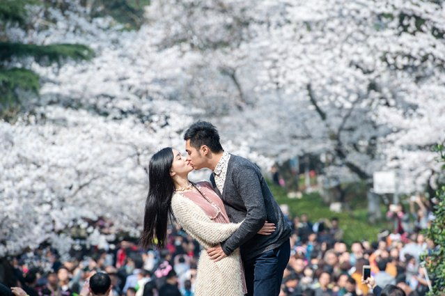 This picture taken on March 21, 2015 shows a couple kissing in front of blooming cherry blossoms in Wuhan in central China's Hubei province. The cherry blossoms, now in full bloom, attracted tens of thousands of visitors, local media reported. (Photo by AFP Photo/Stringer)