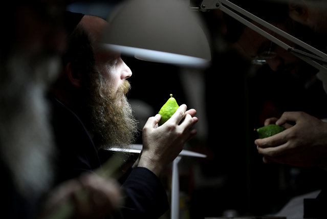 An ultra-Orthodox Jewish man checks an etrog, a citrus fruit used in rituals during the Jewish holiday of Sukkot, at a market in Jerusalem's Mea Shearim neighborhood, Jerusalem, September 20, 2018. (Photo by Ammar Awad/Reuters)