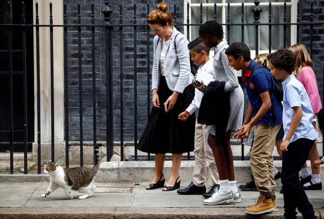 School children interact with Larry the cat at Downing Street in London, Britain on August 30, 2019. Larry is the 10 Downing Street cat and is Chief Mouser to the Cabinet Office. He is a brown and white tabby, believed to have been born in January 2007. (Photo by Henry Nicholls/Reuters)