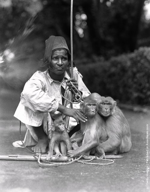 INDIA - CIRCA 1930s:  Young man wearing fez, with three trained monkeys
