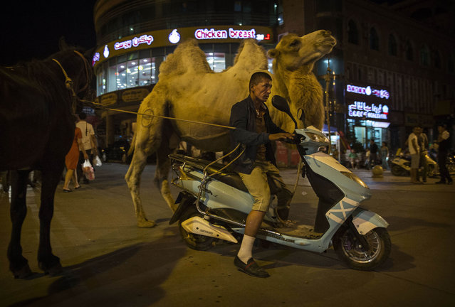 A Uyghur man rides a scooter as he pulls his camel and horse on August 2, 2014 in Kashgar, Xinjiang Province, China. (Photo by Kevin Frayer/Getty Images)