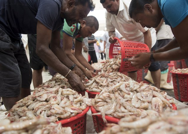 Workers prepare baskets of shrimp just ahead of it being auctioned off in the Kuwait Fishmarket in Sharq, Kuwait City, August 25, 2015. (Photo by Stephanie McGehee/Reuters)