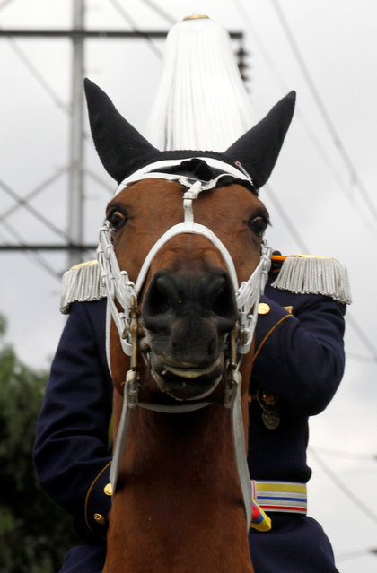 A soldier on a horse participates in a military parade to celebrate the 206th anniversary of Colombia's independence in Bogota, Colombia, July 20, 2016. (Photo by John Vizcaino/Reuters)