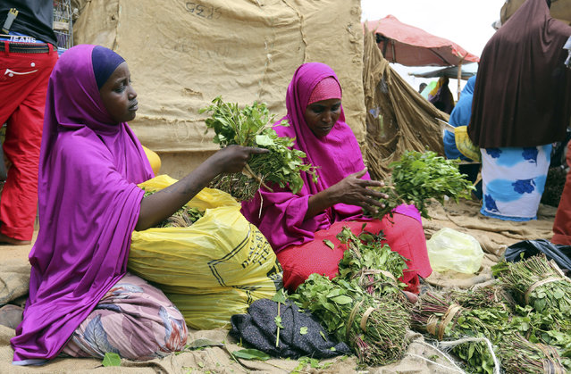 A woman and her daughter arrange branches of khat into small bundles in Mogadishu August 9, 2014. (Photo by Thomas Mukoya/Reuters)
