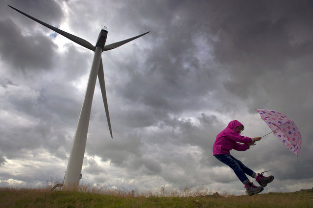 As stormy weather continues to lash the country, Suzanne Roberts, 6, plays with an umbrella as a gale blows by a wind turbine at Brassington near Ashbourne in the Derbyshire Peak District. (Photo by F Stop Press/Visual Press Agency)