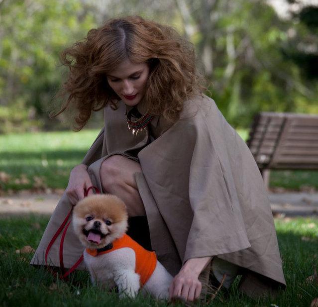 Meet Boo - The World's Cutest Dog