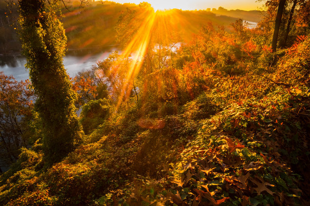 The sun streaks through the fall foliage at sunrise along the Potomac River in Arlington, Va., Wednesday, November 4, 2015 on a warm fall day in the nation's Capitol area. (Photo by J. David Ake/AP Photo)