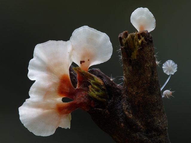 Fungi. (Steve Axford)