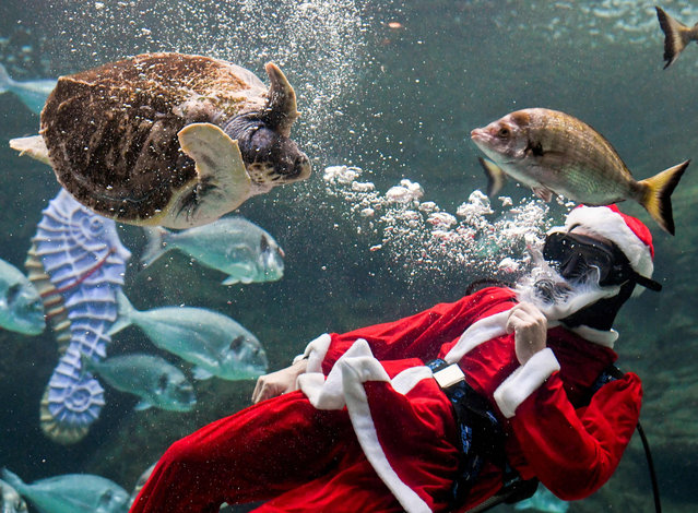 A man dressed as Santa Claus dives at the Creta Aquarium in the city of Heraklion on the Greek southern island of Crete on December 14, 2019. (Photo by Jason Tavlas/AFP Photo)
