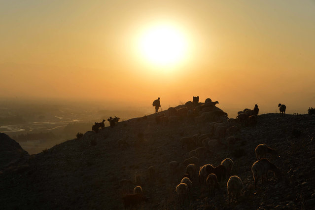 A shepherd leads his herd of sheep and goats on a hilltop during sunset on the outskirts of Jalalabad on December 2, 2020. (Photo by Noorullah Shirzada/AFP Photo)