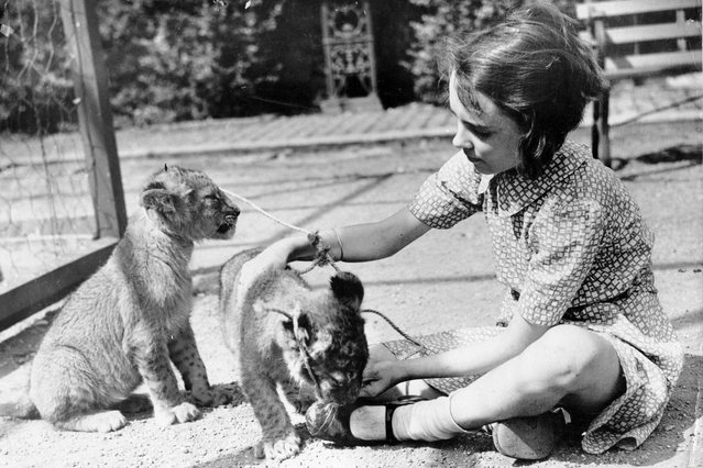 An old photograph of June playing with two lion cubs. A woman whose childhood friends included a lion, chimpanzee and polar bear has revealed her incredible family scrapbook more than 80 years after her dad opened the UKs biggest zoo. (Photo by Mercury Press/Caters News/SIPA Press)
