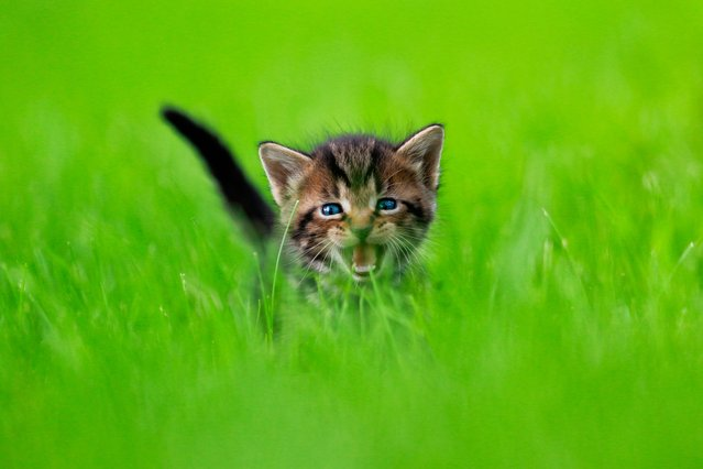"""Dora the Explorer. """"Not surprisingly, baby cats began popping up"""". (Photo by  Seth Casteel/Hachette Australia)"""