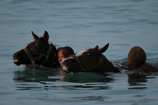 Handlers playfully race as they swim with horses from the Garrison Savannah in the Caribbean Sea near Bridgetown, Barbados December 1, 2016. (Photo by Adrees Latif/Reuters)