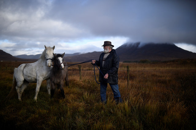 Henry Judge from Sligo holds Connemara ponies he is selling at the annual Maam Cross fair in the Connemara region of Maam Cross in Galway, Ireland, October 30, 2018. (Photo by Clodagh Kilcoyne/Reuters)