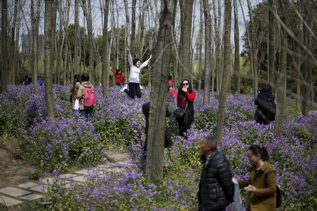 People visit a park with blooming flowers during spring in Shanghai March 24, 2015. (Photo by Aly Song/Reuters)