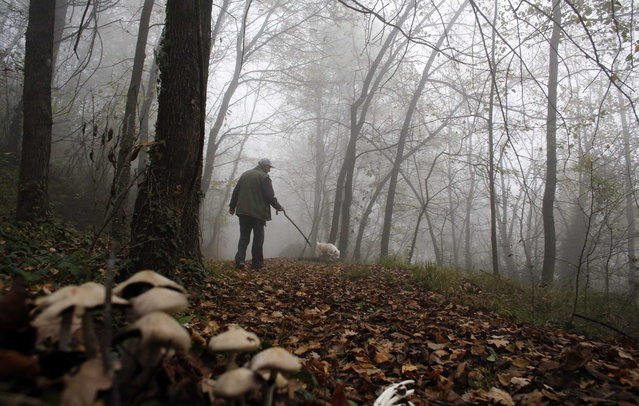 Truffle hunter Ezio Costa, 66, searches for truffles with his dog Jolly in the woods in Monchiero near Alba, northwestern Italy November 9, 2013. Costa's family have been truffle hunters for four generation. (Photo by Stefano Rellandini/Reuters)