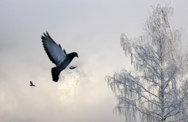 Pigeons fly near Yenisei River covered with frost evaporation, with the air temperature at about -26 degrees Celsius, outside the Siberian city of Krasnoyarsk, Russia December 7, 2018. (Photo by Ilya Naymushin/Reuters)