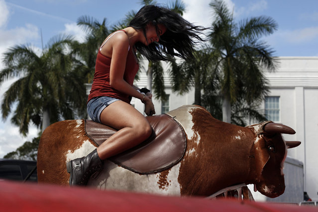 Karina Rodriguez rides a mechanical bull during the Everglades Seafood Festival on Saturday, February 8, 2014 in Everglades City. Tens of thousands of visitors came out to the festival that seems to take over the fishing community. (Photo by Dania Maxwell/Naples Daily News)