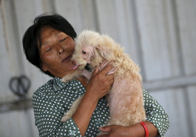 Dog lover Yang Xiaoyun holds a dog which she purchased in China's southern town of Yulin, at her shelter for dogs in Tianjin, China, July 8, 2015. (Photo by Kim Kyung-Hoon/Reuters)