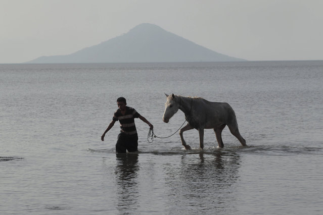 A man leads a horse on Xolotlan lake off the coast near Mateares town April 29, 2014. Xolotlan Lake was the epicenter of the recent earthquake that struck  Nicaragua.President Daniel Ortega's government has maintained a red alert in some municipalities of Nicaragua after three major earthquakes occurred recently. (Photo by Oswaldo Rivas/Reuters)