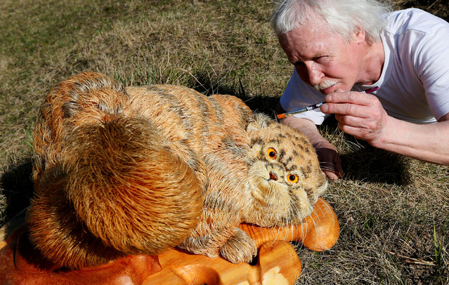 Sergei Bobkov, 59, paints Siberian cedar nut oil onto a life-size sculpture of Pallas's Cat, also known in Russia as Manul Cat, which he made from Siberian cedar wood shavings using more than 700 thousand pieces over four years, in the village of Kozhany, southwest of the Siberian city of Krasnoyarsk, Russia, April 28, 2017. (Photo by Ilya Naymushin/Reuters)