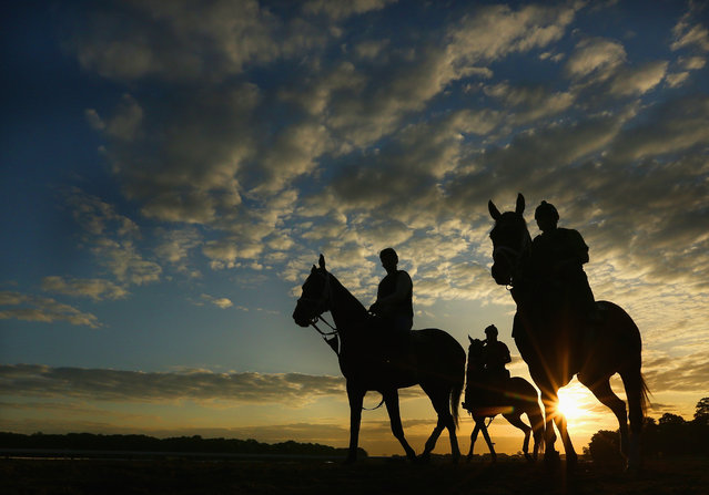 Horses and exercise riders train on the main track  during sunrise at Belmont Park on May 30, 2014 in Elmont, New York. (Photo by Al Bello/Getty Images)