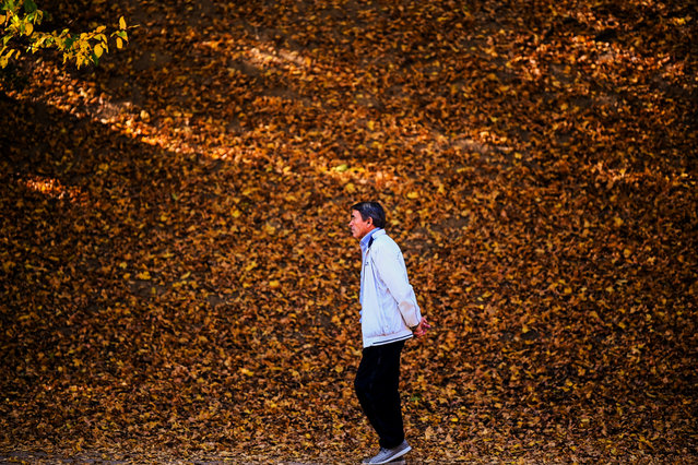 A man walks in the park, covered with fallen yellow leaves, near Pristina, Kosovo on October 23, 2019. (Photo by Armend Nimani/AFP Photo)