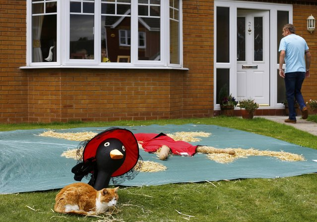 "A cat lies next to a scarecrow titled ""Gone with the Wind"" during the Scarecrow Festival in Heather, Britain July 29, 2015. (Photo by Darren Staples/Reuters)"