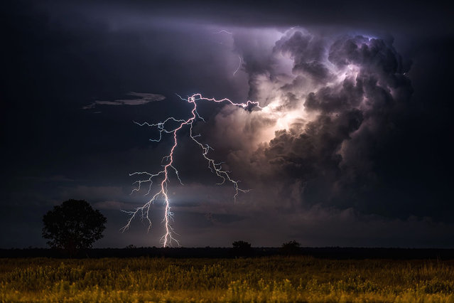 An incredible clear-air lightning display from storms to the east of Noonamah, just outside Darwin on April 6, 2015. (Photo by Jacci Ingham/The Guardian)