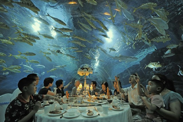 Tourists have dinner as fish swim around them, at the Tianjin Haichang Polar Ocean World in Tianjin, September 1, 2014. (Photo by Reuters/Stringer)