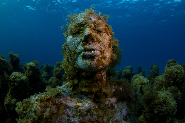 Monumental Underwater Museum MUSA; Jason deCaires Taylor; Silent Evolution