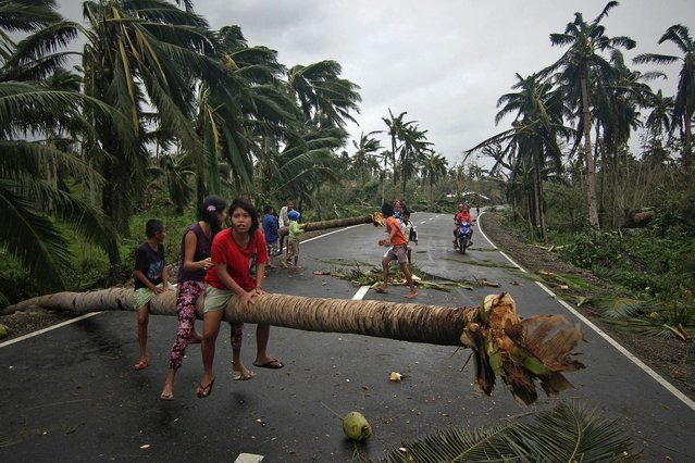 Children sit on a fallen coconut tree in Borongan, in the eastern Samar province, in central Philippines, a day after typhoon Hagupit hit the province, on December 8, 2014. Millions of people in the Philippine capital hunkered down as a major storm churned towards the megacity, after killing at least 21 people and destroying thousands of homes on remote islands. (Photo by Vincent Go/AFP Photo)