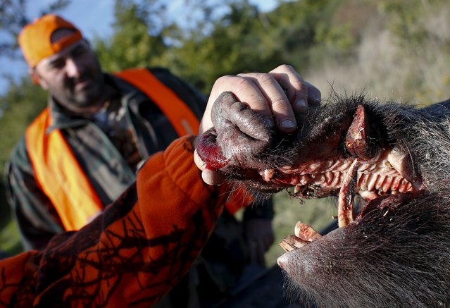 A dead wild boar is seen during a hunt in Castell'Azzara, Tuscany, central Italy, October 23, 2015. (Photo by Max Rossi/Reuters)
