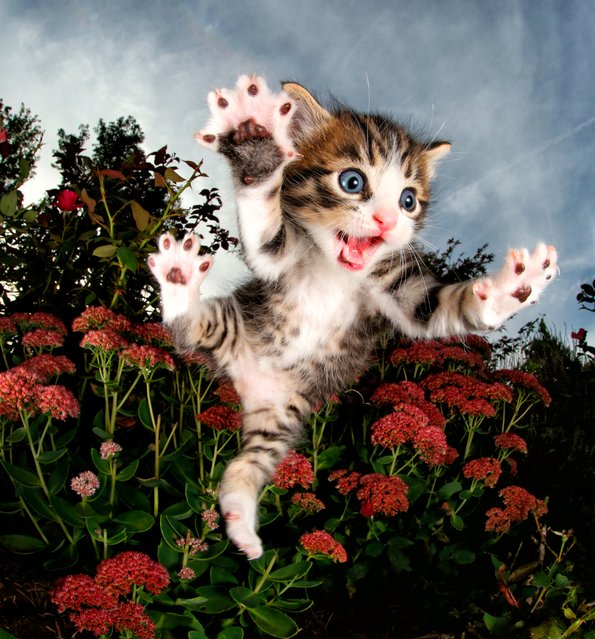 """Chicken in the flowers. """"My """"cat people"""" friends became a little overwhelmed"""". (Photo by  Seth Casteel/Hachette Australia)"""