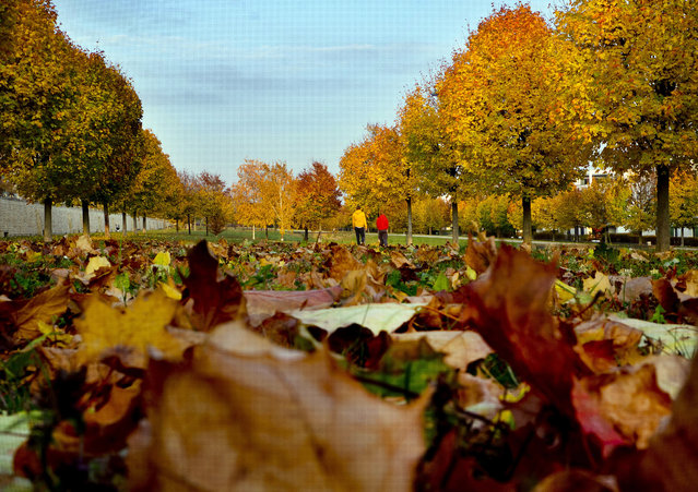 People walk through a park with colorful trees and fallen leaves in Frankfurt, Germany, Monday, November 5, 2018. (Photo by Michael Probst/AP Photo)