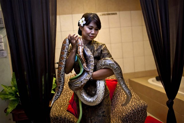 A member of the staff holds pythons used in massage treatments at the Bali Heritage Reflexology and Spa in Jakarta, Indonesia, on Oktober 27, 2013. The snake spa offers a unique massage treatment which involves having several pythons placed on the customer's body. The movement of the snakes and the adrenaline triggered by fear is said to have a positive impact on the customers metabolism. (Photo by Ulet Ifansasti/Getty Images)