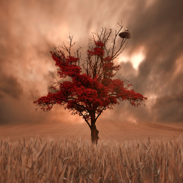 """""""Solitare"""". (Photo by Ionut Caras)"""