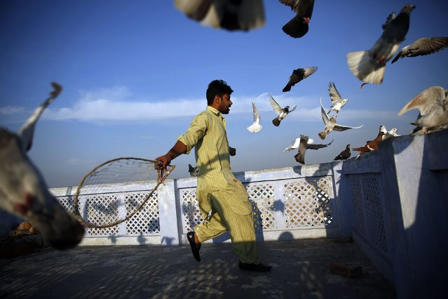 A resident makes his pet pigeons fly away from the roof of his house in the old quarters of Delhi March 18, 2015. Some local residents carry out this activity during sunrise and sunset. (Photo by Ahmad Masood/Reuters)