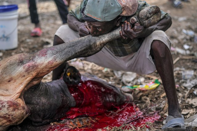 A butcher blows into the skin of a cow's leg in order to peel it off, on the first market day since the earthquake in Camp Perrin, Haiti, Friday, August 20, 2021, six days after a 7.2 magnitude quake. (Photo by Fernando Llano/AP Photo)