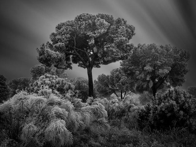 Winter Hibernation, Salamanca, Spain. (Photo by Giuseppe Satriani/The International Garden Photographer of the Year)