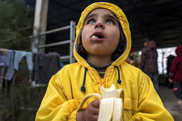 A refugee girl eats a banana at a makeshift camp near the Greek-Macedonian border, near the Greek village of Idomeni, Greece, 28 March 2016. More than 10,000 refugees and migrants are still waiting at the makeshift camp near Idomeni to enter Macedonia and continue onto EU countries. (Photo by Georgi Licovski/EPA)